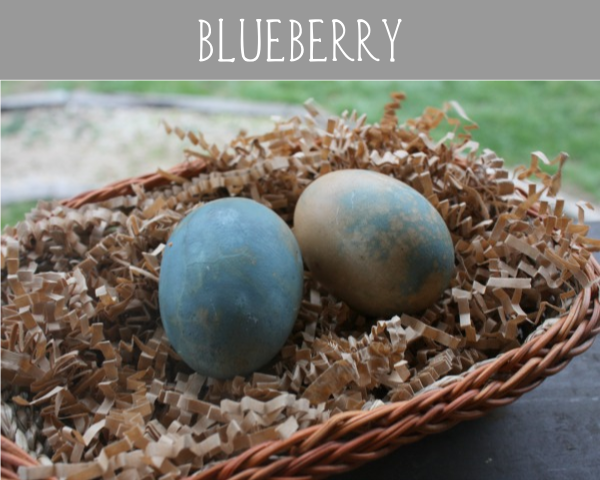 blueberry eggs