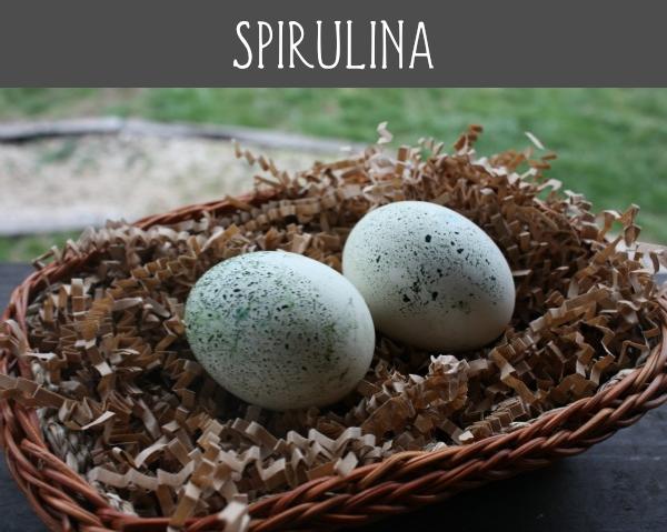 spirulina eggs