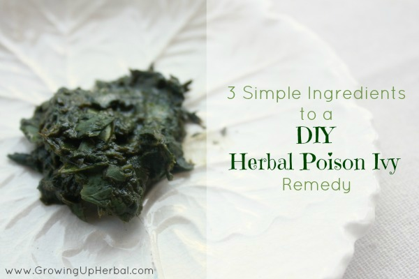 Guest Post: 3 Simple Ingredients To A DIY Herbal Poison Ivy Remedy
