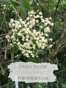 3 Ways To Use Elder Flower For Your Kids | Growing Up Herbal | Here are 3 ways you can use gentle, effective elderflowers with your little ones!