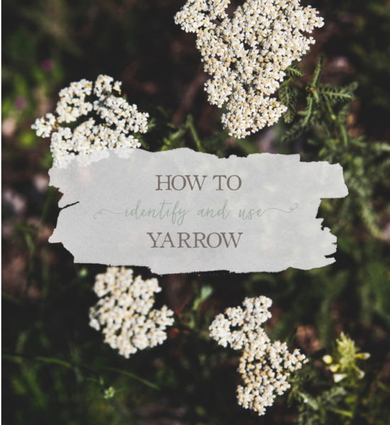 How To Identify and Use Yarrow