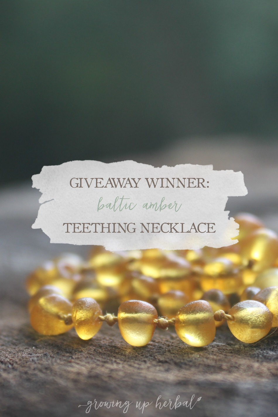 Hazelaid Giveaway Winner | Growing Up Herbal | Who won the Baltic amber teething necklace? Find out here!