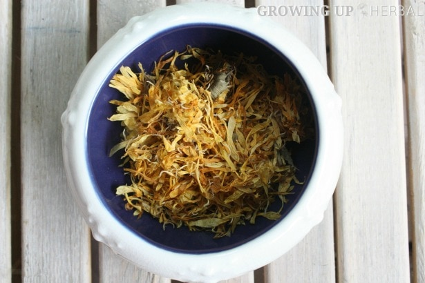 Learning Herbs: June Herb Challenge – Week 3 | GrowingUpHerbal.com | Calendula Essential Oil, Infusions, & Poultices
