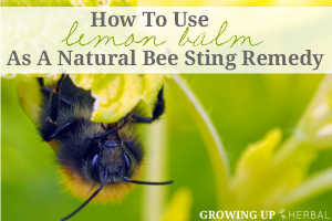How To Use Lemon Balm As A Natural Bee Sting Remedy | GrowingUpHerbal.com | Unfortunately, bee stings are a part of summer, but lemon balm is here to help!