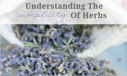 Understanding The Simplicity Of Herbs