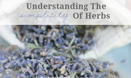Understanding The Simplicity Of Herbs