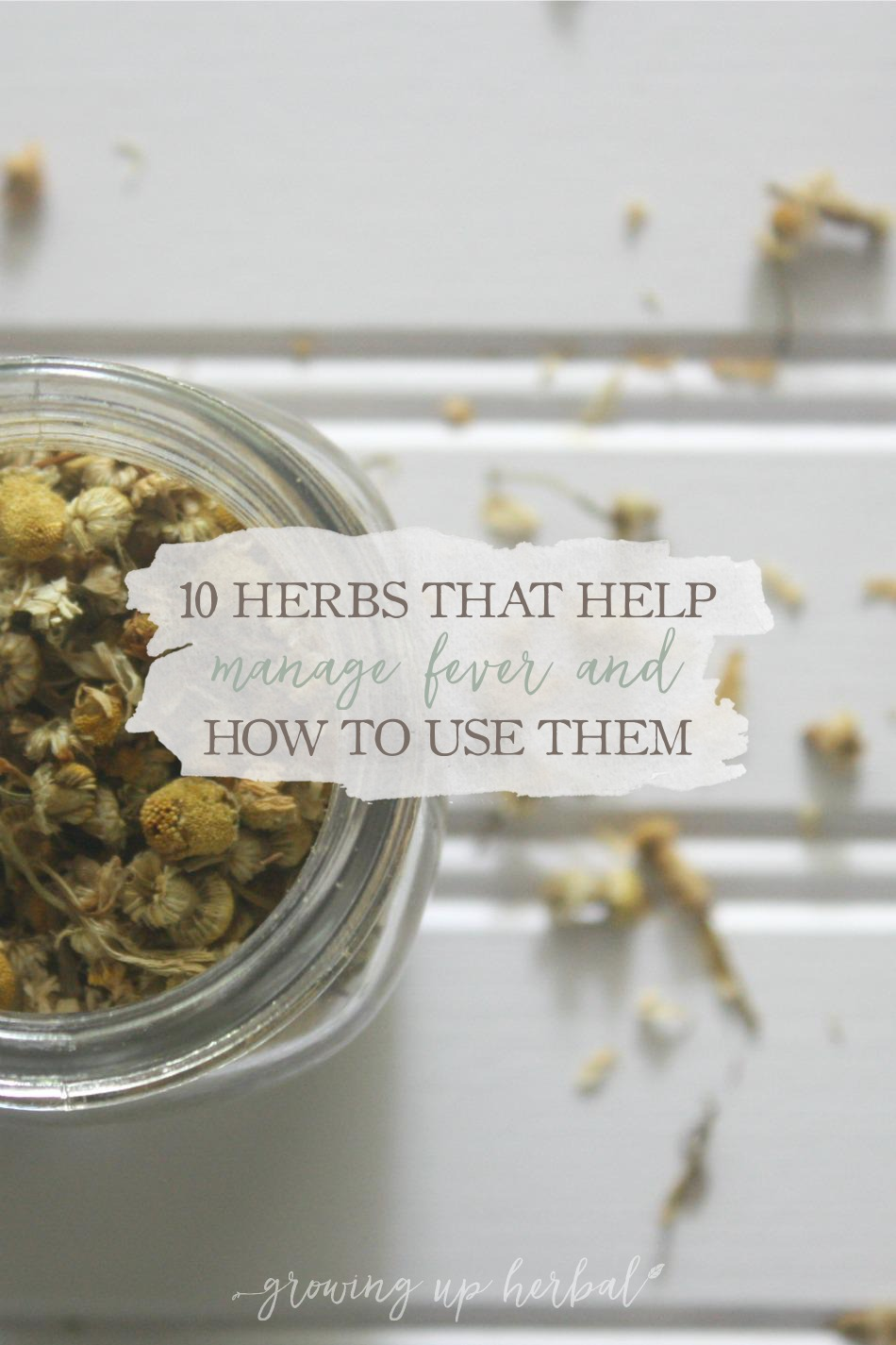 10 Herbs That Help Manage Fever & How To Use Them | Growing Up Herbal | Looking for ways to manage a fever with herbs? Here are 10 herbs to look into!