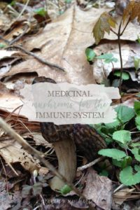 Medicinal Mushrooms for the Immune System | Growing Up Herbal | Learn about medicinal mushrooms and how they benefit your immune system!