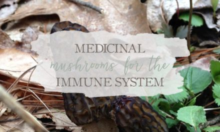 Medicinal Mushrooms for the Immune System