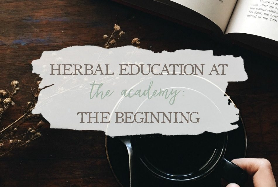 Herbal Education At The Academy: The Beginning