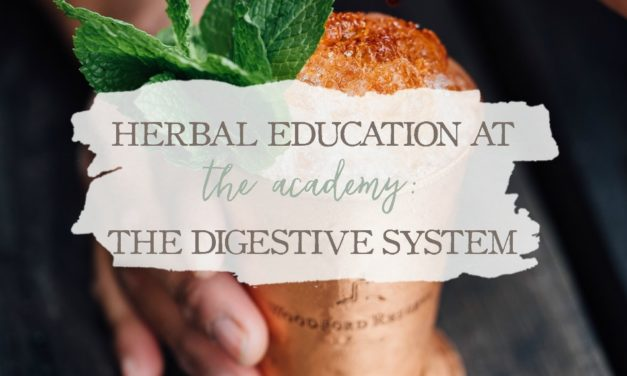 Herbal Education At The Academy: The Digestive System