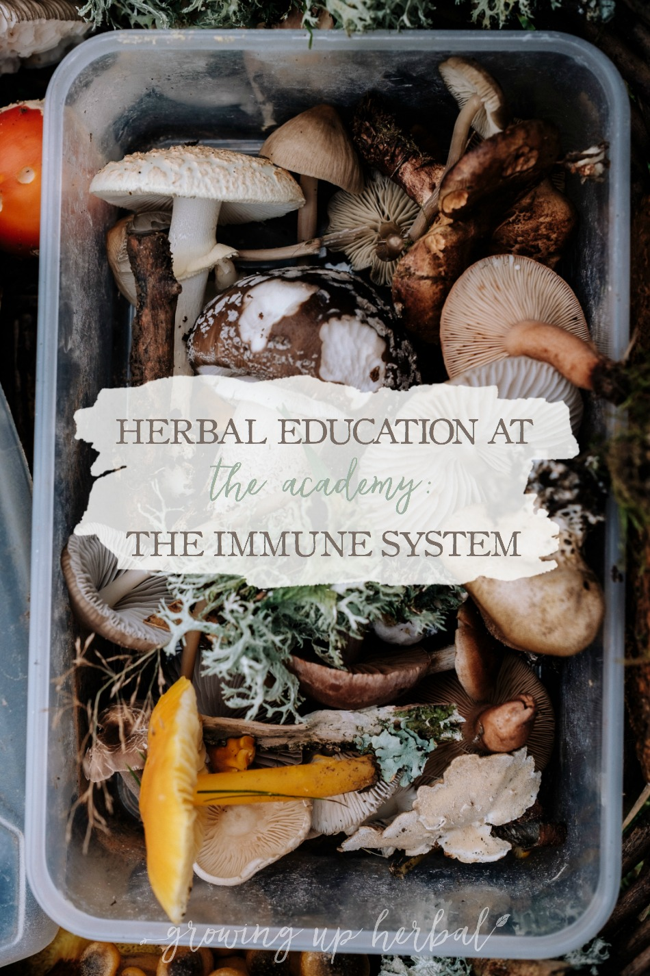 Herbal Education At The Academy: The Immune System | Growing Up Herbal | Interested in going to herbal school? Here's a sneak peek at the Herbal Academy's Intermediate herbal course!