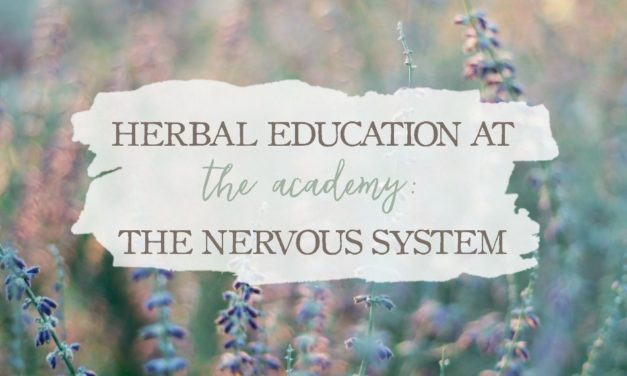 Herbal Education At The Academy: The Nervous System