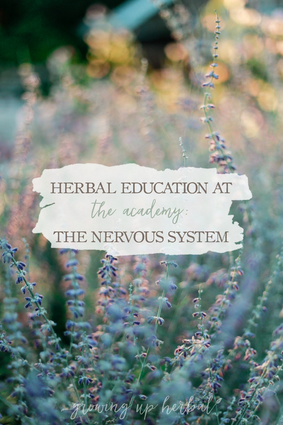 Herbal Education At The Academy: The Nervous System | Growing Up Herbal | Interested in going to herbal school? Here's a sneak peek at the Herbal Academy's Intermediate herbal course!