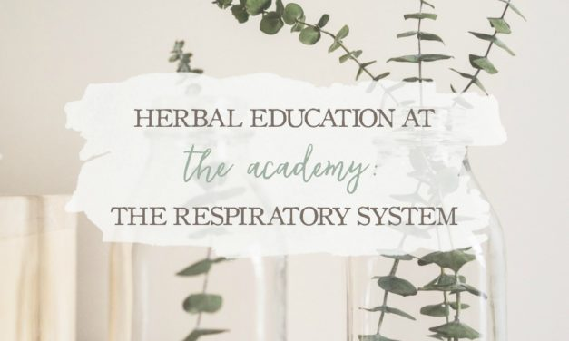 Herbal Education At The Academy: The Respiratory System