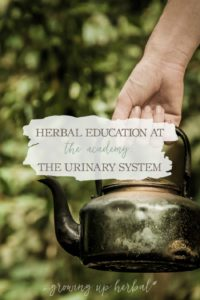 Herbal Education At The Academy: The Urinary System | Growing Up Herbal | Interested in going to herbal school? Here's a sneak peek at the Herbal Academy's Intermediate herbal course!