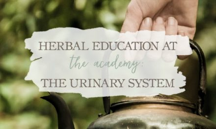 Herbal Education At The Academy: The Urinary System
