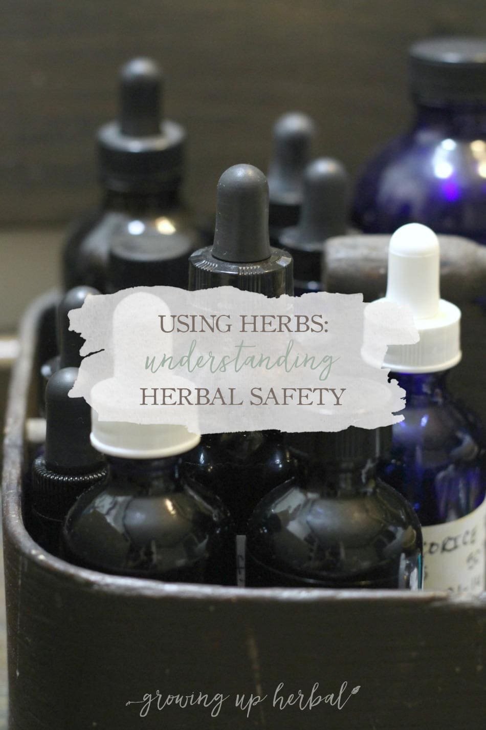 Understanding Herbal Safety | GrowingUpHerbal.com | Curious about the safety of using herbs for your family? Here are some answers.