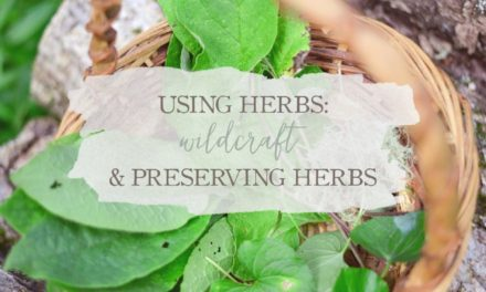 Using Herbs: Wildcrafting And Preserving Herbs