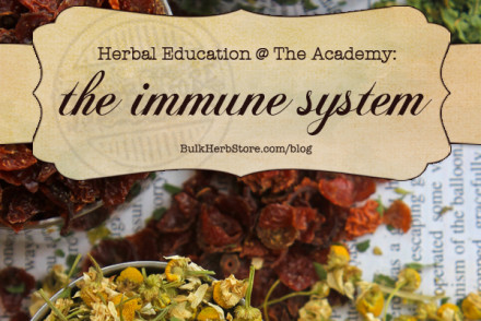Herbal Education At The Academy: The Immune System | Growing Up Herbal | Having a healthy immune system is one of the most important things you can do for your body! Come learn what HANE has to say about it and get an immune boosting remedy recipe too!