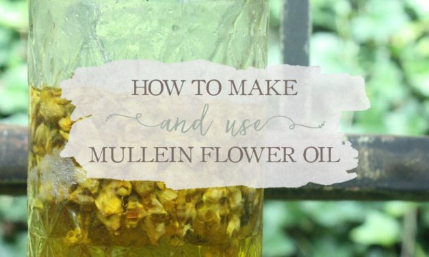 How To Make And Use Mullein Flower Oil