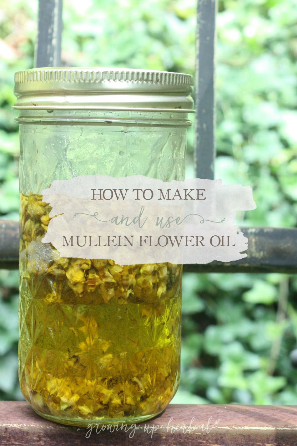 How To Make And Use Mullein Flower Oil | Growing Up Herbal | Mullein flower oil is a great oil to keep on hand as it can be used in many ways for your family's wellness.