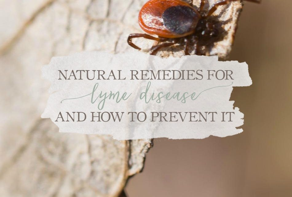Natural Remedies For Lyme Disease and How to Prevent it | Growing Up