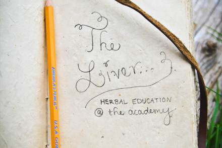 Herbal Education At The Academy: The Liver | Growing Up Herbal | Come learn about the liver and herbs that help it function well in this months Herbal Education post!