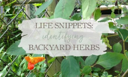 Life Snippets: Identifying Backyard Herbs (Video)