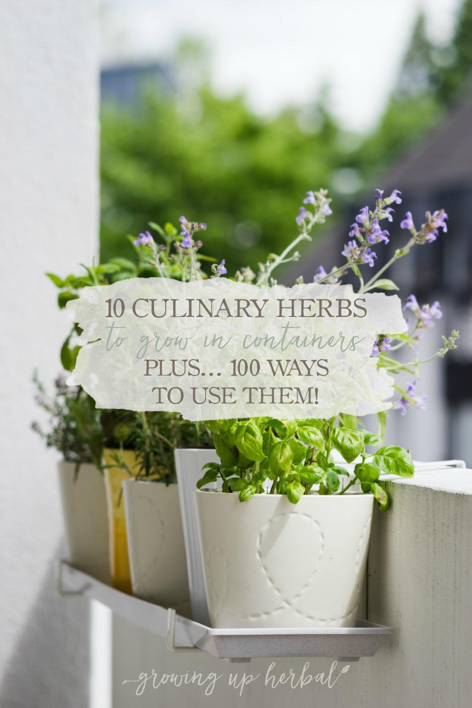 10 Culinary Herbs To Grow In Containers (+ 100 Ways To Use Them)