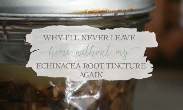 Why I'll Never Leave Home Without My Echinacea Root Tincture Again