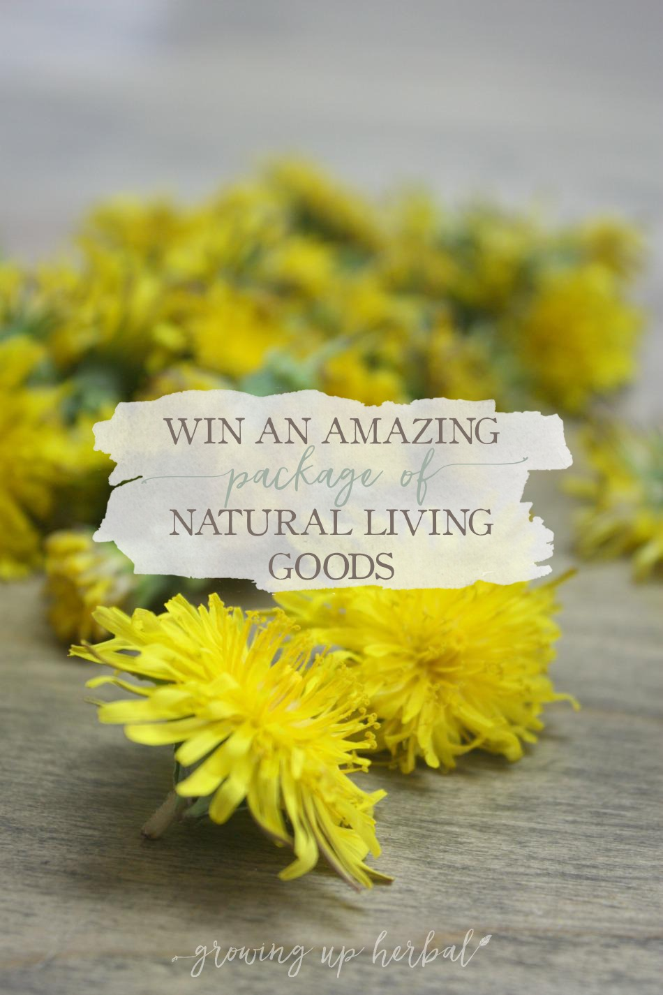 Win An Amazing Package of Natural Living Goods | Growing Up Herbal | What happens when 3 herbalists and a chiropractor plan a giveaway together? Find out here!