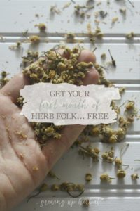 Get Your First Month of Herb Folk For FREE! | Growing Up Herbal | Herb Folk is an exclusive membership site dedicated to helping herbal-minded folks learn about and use herbs through the study and use of one herb a month. Get your first month FREE!