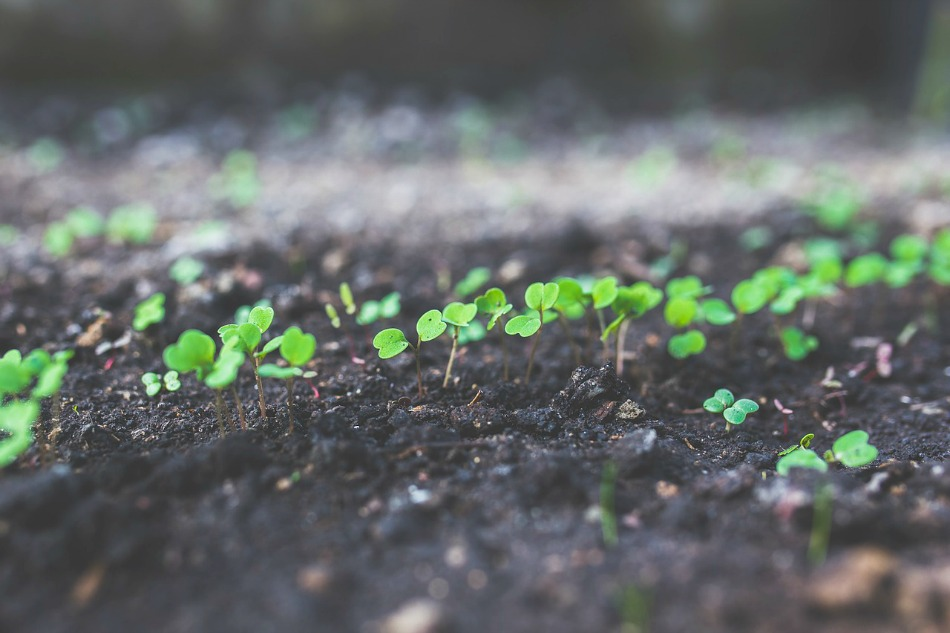 5 Steps to Start an Herb Garden This Year | Growing Up Herbal | Learn how to start an herb garden in 5 steps... from start to finish in this blog post!