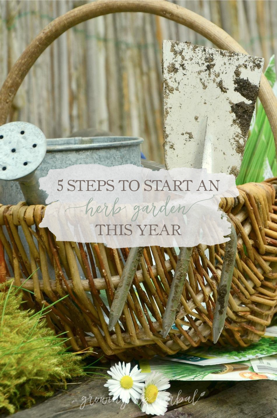 5 Steps to Start an Herb Garden This Year