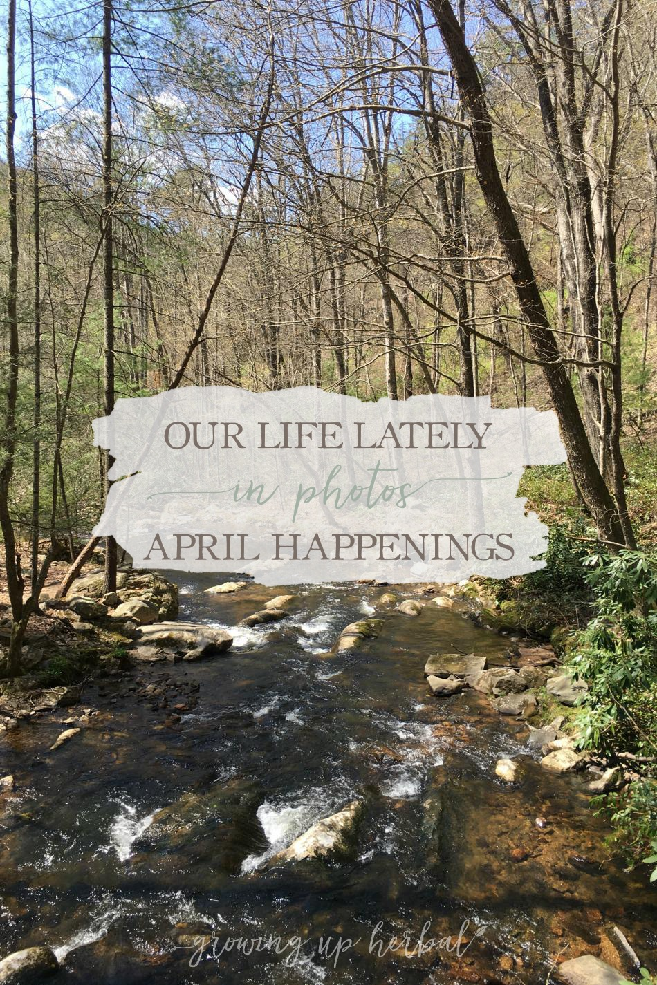 Our Life Lately In Photos: April Happenings | Growing Up Herbal | Come check out what life has been like for us this past April... through photos!