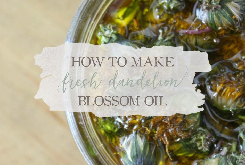How To Make Fresh Dandelion Blossom Oil