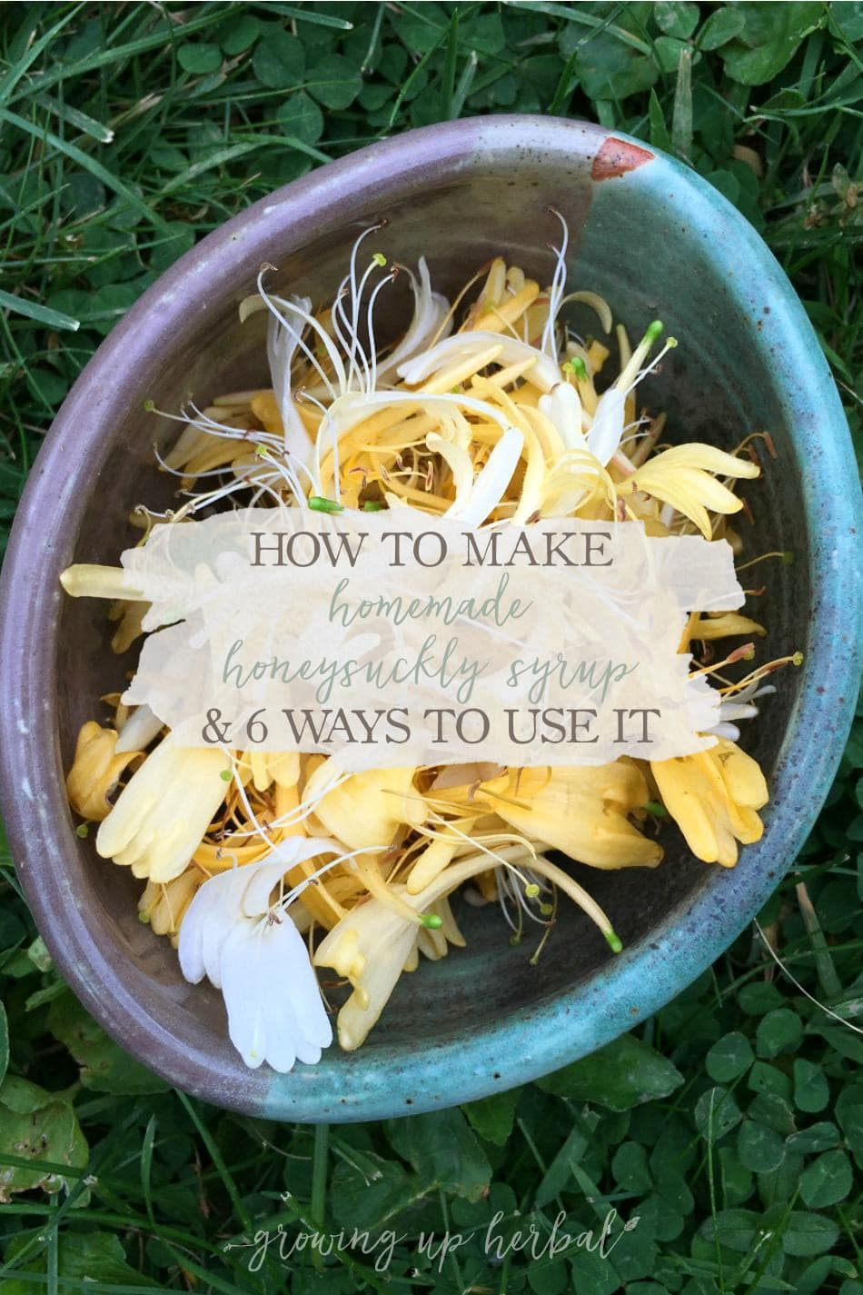 Homemade Honeysuckle Syrup & 6 Ways To Use It | Growing Up Herbal | Learn how to make a simple homemade honeysuckle syrup as well as 6 ways to use it! You've not experienced summer until you've had honeysuckle syrup!