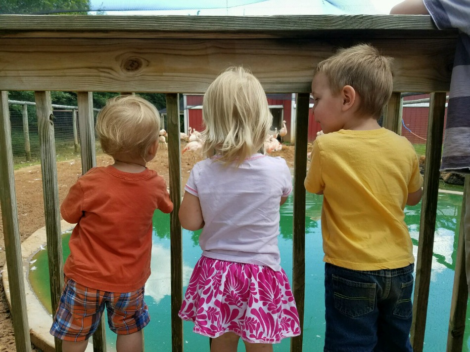 A Summer Day At Bright's Zoo | Growing Up Herbal | We spent the day at the zoo recently with all the cousins. Come along, and check it out!