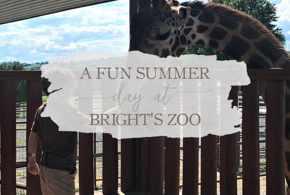 A Fun Summer Day At Bright's Zoo