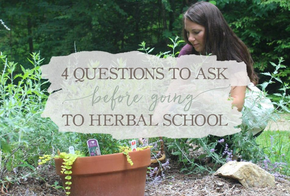 4 Questions To Ask Before Going To Herbal School