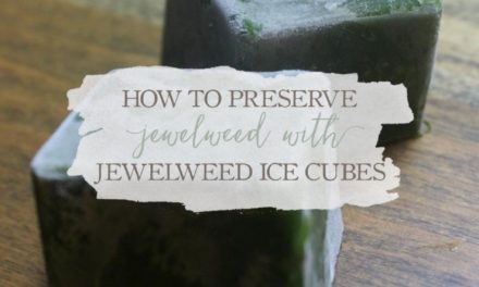 How To Preserve Jewelweed With Jewelweed Ice Cubes