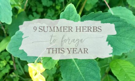 9 Summer Herbs To Forage This Year