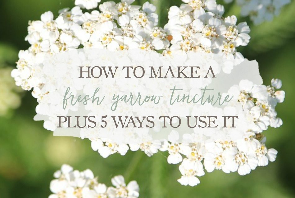 How To Make A Fresh Yarrow Tincture (Plus 5 Ways To Use It)