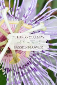 7 Things You May Not Know About Passionflower | Growing Up Herbal | Stuck in a rut with passionflower? Here are 7 little-known ways it has been used in the past. You may be surprised at how many ways this herb can be used!