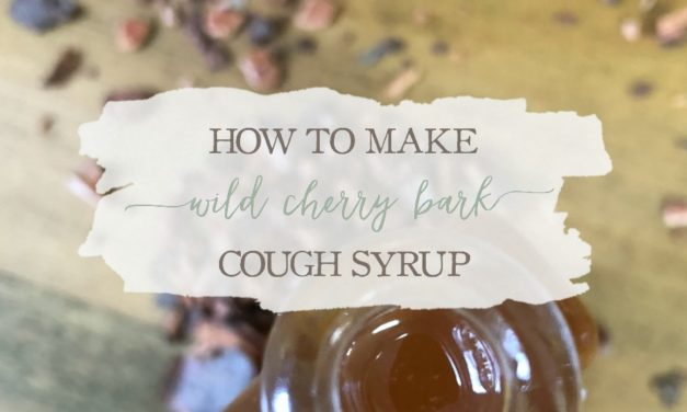 How to Make Wild Cherry Bark Cough Syrup
