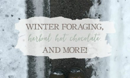 Winter Foraging, Herbal Hot Chocolate, and More!