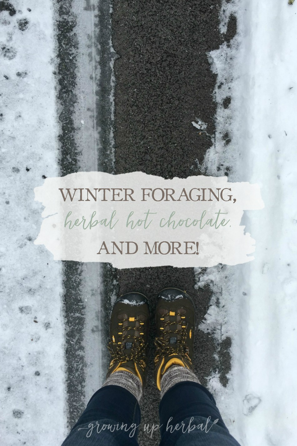 Winter Foraging, Herbal Hot Chocolate, and More! | Growing Up Herbal | Get a glimpse into one of my Letters to Natural Mamas emails. I'm talking foraging for herbs in winter and sharing an herbal hot chocolate recipe… and more!