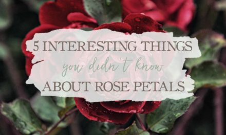 5 Interesting Things You Didn't Know About Rose Petals