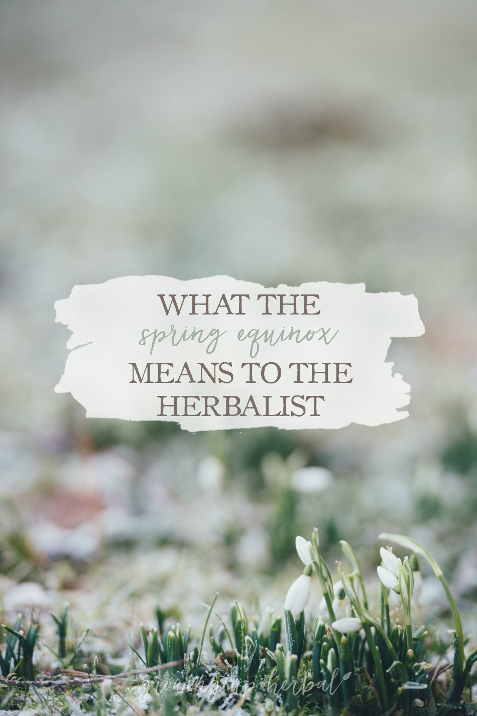 What The Spring Equinox Means To The Herbalist | Growing Up Herbal | Ever wondered how the changing of the seasons impacts you as an herbalist? Read more here to find out some interesting facts about the Spring Equinox as well as what it means to the herbalist.